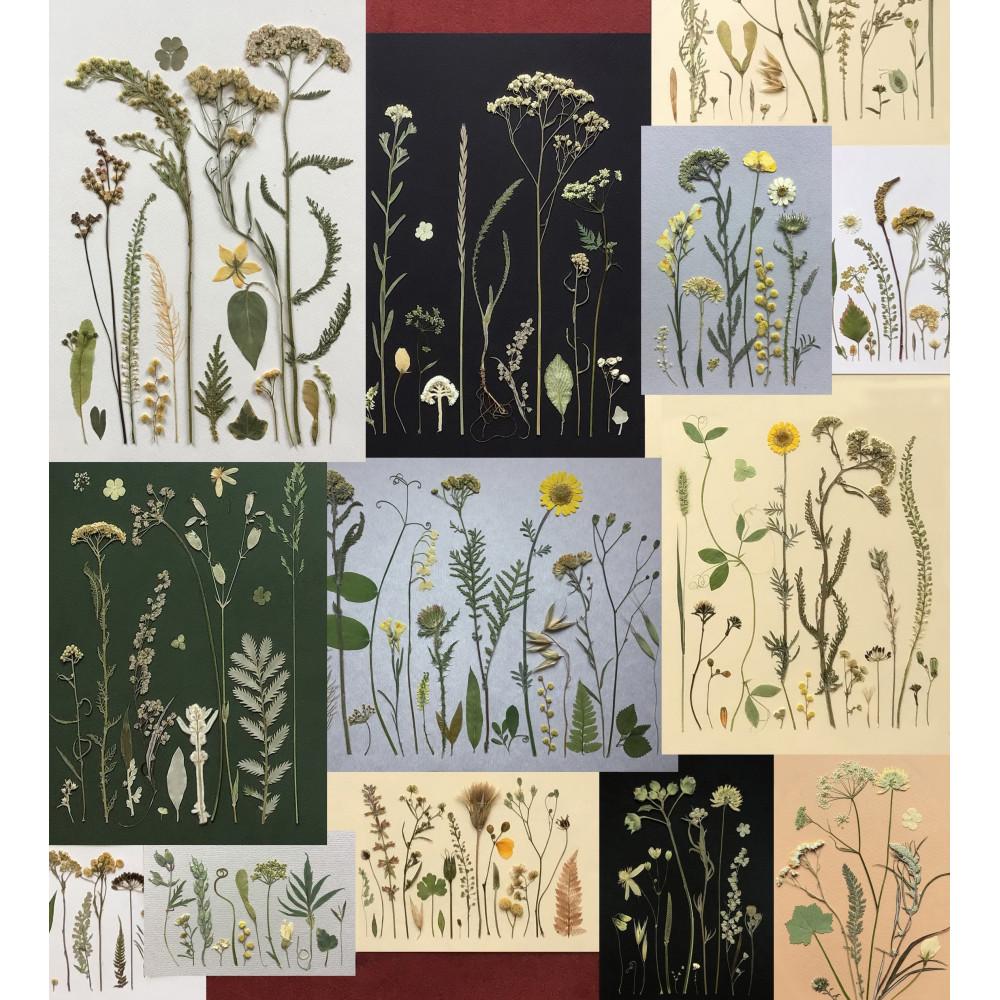 Язык цветов и трав