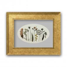 Гербарная композиция из 11 растений и цветов (в паспарту)