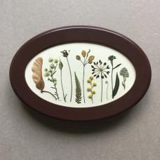 Гербарная композиция из 11 растений и цветов в раме
