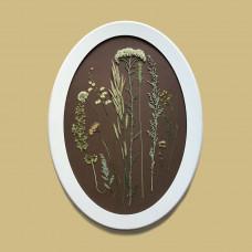 Гербарная композиция из 12 растений и цветов в раме
