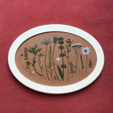 Гербарная композиция из 17 растений и цветов в раме