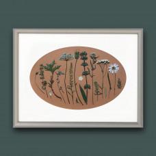 Гербарная композиция из 17 растений и цветов в паспарту