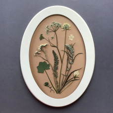 Гербарная композиция из 9 растений и цветов