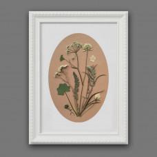 Гербарная композиция из 9 растений и цветов (в паспарту)