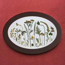 Гербарная композиция из 25 растений и цветов в раме