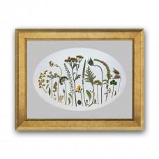 Гербарная композиция из 25 растений и цветов в паспарту