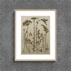 Гербарная композиция (гербарий) из 19 растений и цветов