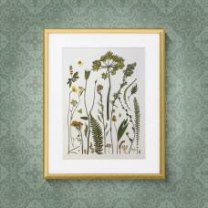 Гербарная композиция (гербарий) из 25 растений и цветов