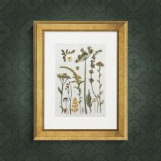 Гербарная композиция из 15 растений и трав