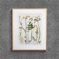Гербарная композиция из 15 растений и цветов